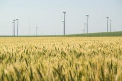 Campo de grões do trigo com as turbinas eólicas no fundo Foto de Stock Royalty Free