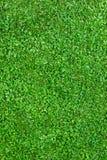 Campo de grama Imagens de Stock