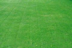 Campo de grama Foto de Stock