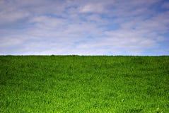 Campo de grama Foto de Stock Royalty Free