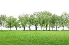 Campo de grama. Fotografia de Stock
