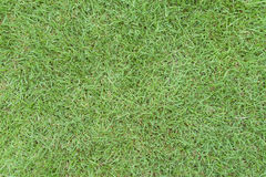 Campo de grama Imagem de Stock