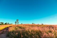 Campo de grama com céu Imagens de Stock