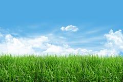 Campo de grama com céu azul Imagens de Stock