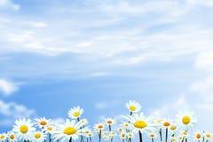 Campo de grama com céu azul Imagens de Stock Royalty Free