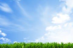 Campo de grama com céu azul Fotos de Stock
