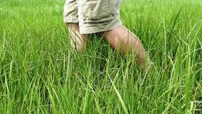 Campo de grama do cruzamento do homem vídeos de arquivo