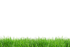 Campo de grama do isolado Imagens de Stock Royalty Free