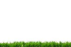 Campo de grama do isolado Foto de Stock