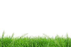 Campo de grama do isolado Fotografia de Stock Royalty Free