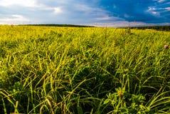 Campo de grama e céu dramático no por do sol Fotografia de Stock