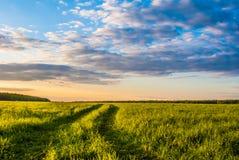 Campo de grama e céu dramático no por do sol Imagem de Stock