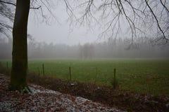 Campo de grama em uma paisagem do inverno fotografia de stock