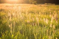 Campo de grama no por do sol Foto de Stock
