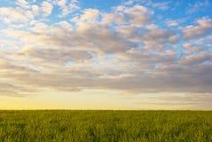 Campo de grama no por do sol fotografia de stock royalty free