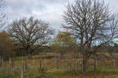 Campo de grama seco do outono Imagem de Stock Royalty Free