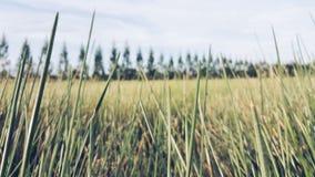 Campo de grama verde foto de stock