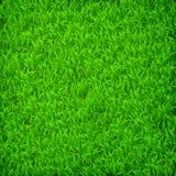 Campo de grama verde Imagens de Stock Royalty Free