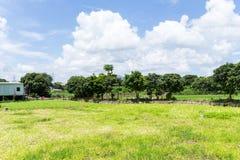 Campo de grama verde fotografia de stock royalty free