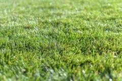 Campo de grama verde com fundo do parque do borrão fotografia de stock royalty free