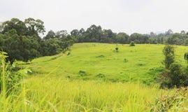 Campo de grama verde da paisagem Imagens de Stock Royalty Free