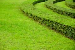 Campo de grama verde do jardim no parque fotos de stock