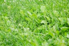 Campo de grama verde e céu azul brilhante Fotografia de Stock Royalty Free
