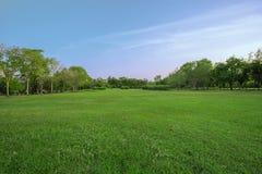 Campo de grama verde grande no parque grande da cidade fotos de stock