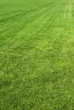Campo de grama verde natural Fotografia de Stock