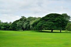 Campo de grama verde no parque Fotos de Stock