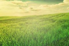 Campo de grama verde no terreno montanhoso e céu azul brilhante com nuvens fotos de stock royalty free