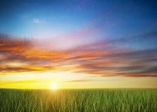 Campo de grama verde sob o céu colorido do por do sol Fotografia de Stock