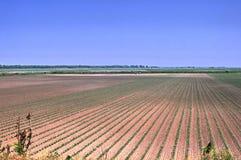 Campo de granja foto de archivo
