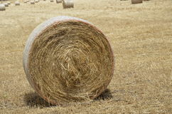 Campo de granja Foto de archivo libre de regalías