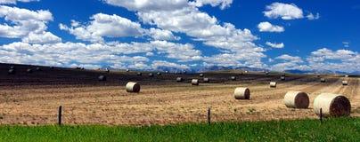 Campo de granja Imagen de archivo libre de regalías