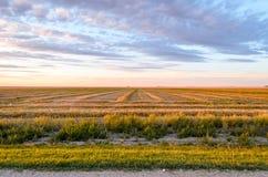 Campo de granja con incluso las filas de la hierba segada, nubes púrpuras enormes imágenes de archivo libres de regalías