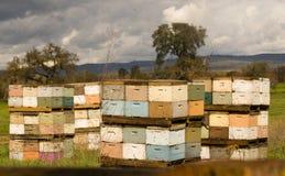 Campo de granja de Boxes Bee Colony del apicultor Fotos de archivo libres de regalías