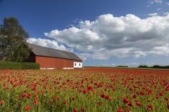 Campo de granja de la amapola Fotografía de archivo