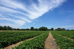 Campo de granja de la primavera Fotografía de archivo libre de regalías