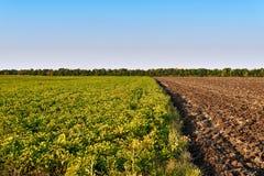Campo de granja verde y amarillo sobre el cielo azul Fotografía de archivo