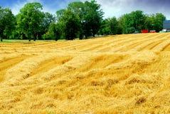 Campo de grano de la cosecha fotos de archivo