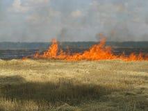 Campo de grano en el fuego Foto de archivo libre de regalías
