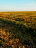 Campo de grano otoñal Imágenes de archivo libres de regalías