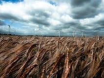 Campo de grano y cielo tempestuoso Fotos de archivo libres de regalías