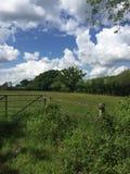 Campo de Hampshire Fotografia de Stock