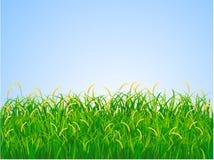 Campo de hierba Fotografía de archivo libre de regalías