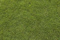 Campo de hierba Fotografía de archivo