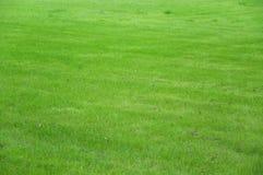 Campo de hierba Imágenes de archivo libres de regalías