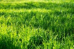 Campo de hierba Foto de archivo libre de regalías