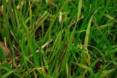 Campo de hierba imagen de archivo libre de regalías
